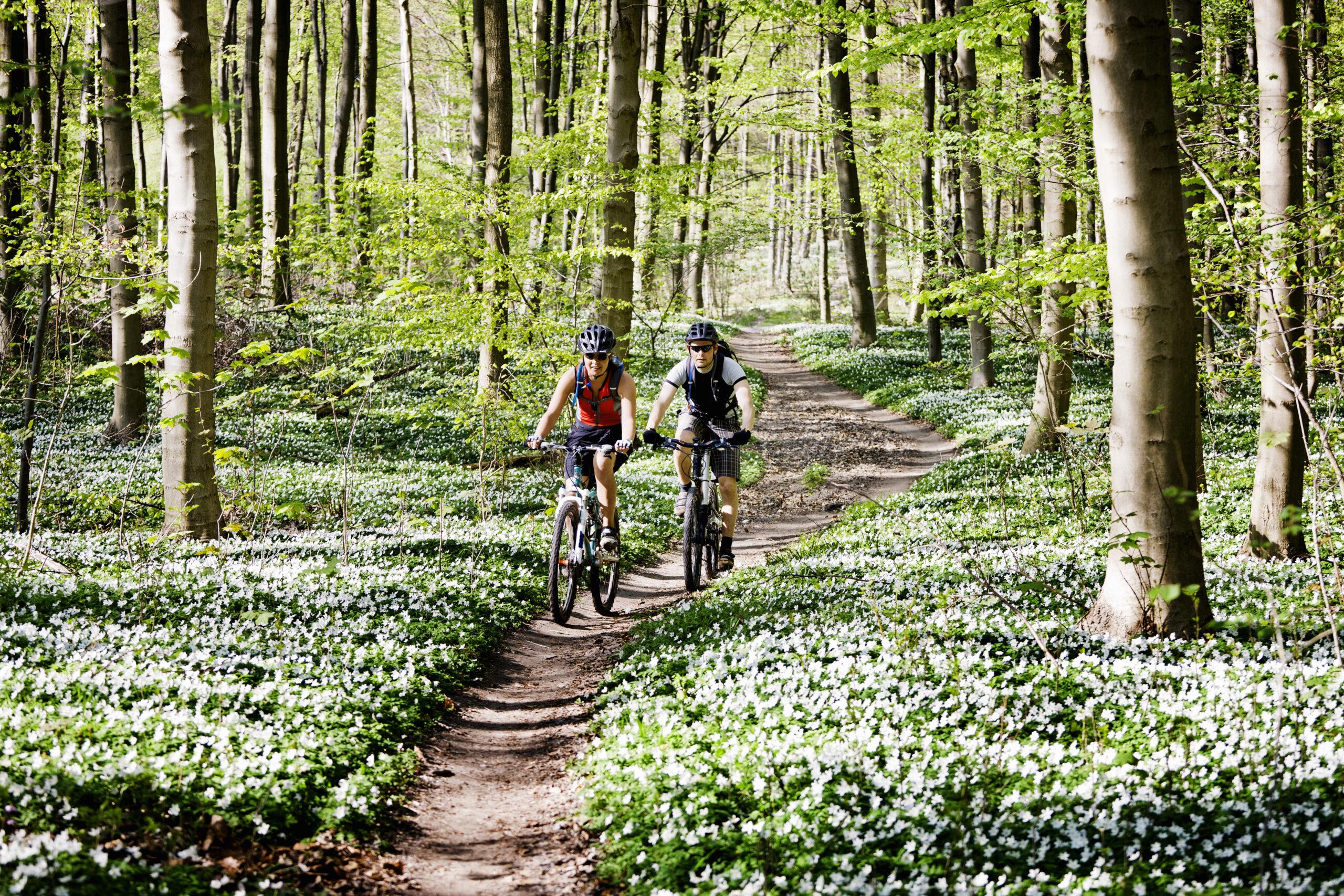 Mountainbiken op de Holterberg